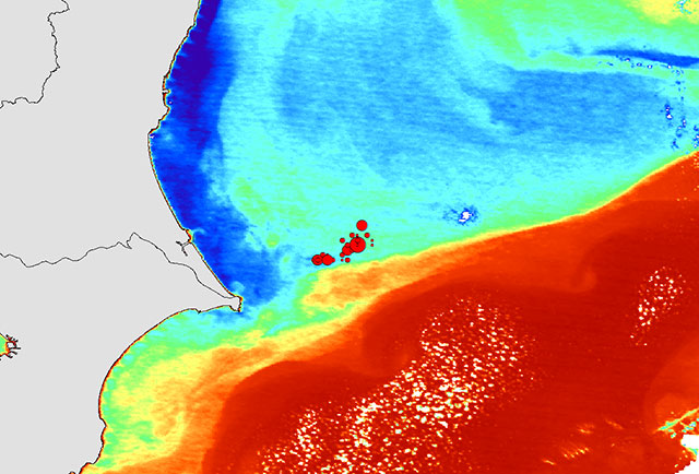 Surface water temperature and the seine fishing ground as observed by Shikisai