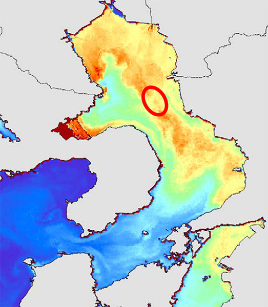 Chlorophyll concentrations and algal blooms
